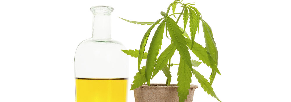 CBD-Oil-on-AmericasBestBlog