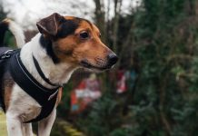 Tips-to-Backpacking-&-Hiking-with-Your-Dogs-on-americasbestblog