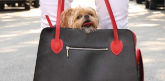 Things-You-Need-To-Consider-Before-Buying-Dog-Carrier-on-americasbestblog